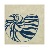 Indigo Shell II