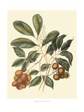Foliage  Flowers and Fruit I