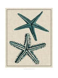 Coastal Starfish I