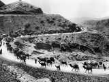 A Camel Caravan on the Khyber Pass on the Northwest Indian Frontier  ca 1930s