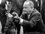 Pres Lyndon Johnson Pulls Ears of One of His Pet Beagles to Arouse a Yelp for White House Visitors