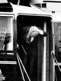 Pres Ford Bumps Head on Helicopter Door on White House Lawn  Oct 22  1974