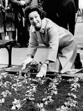 Lady Bird Johnson Planting Pansies on the Famed Capitol Mall