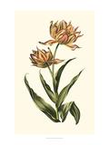 Vintage Tulips III