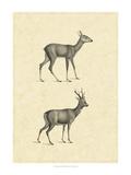Vintage Deer I