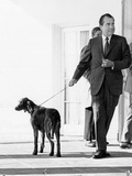 Richard Nixon with His Six Month Old Irish Setter  King Timahoe