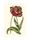 Vintage Tulips VI