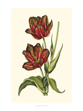 Vintage Tulips V