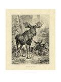 Vintage Moose or Elk