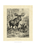 Vintage Moose or Elk