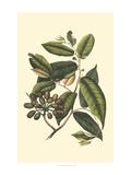 Flourishing Foliage III