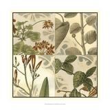 Botanical Quadrant I