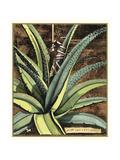 Graphic Aloe III