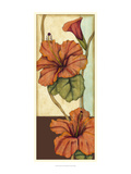 Peacock Hibiscus III