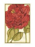 Ruby Blooms II