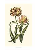 Vintage Tulips IV