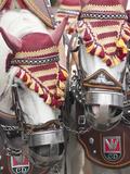 Draft Horses at the Stuttgart Beer Festival  Cannstatter Wasen  Stuttgart  Germany