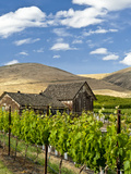 Barn in Vineyard  Yakima  Washington  USA