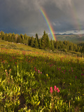 Meadow  Shrine Pass  Colorado  USA
