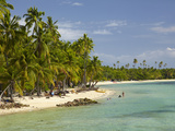 Beach  Palm Trees and Bures  Plantation Island Resort  Malolo Lailai Island  Mamanuca Islands  Fiji