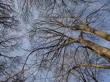 Tree Trunk Design/Pattern  Pioneer Park  Walla Walla  Washington  USA