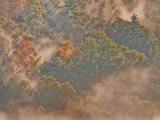 Sun Through Misty Forest  Davis  West Virginia  USA