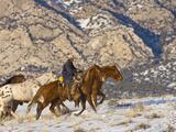 Cowboy Riding Horse  Shell  Wyoming  USA