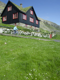 Old Farm House with Sod Roof  Kirkjubor Village  Faroe Islands  Denmark