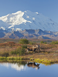 Mt Mckinley  Denali National Park  Alaska  USA