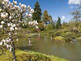 Japanese Gardens Part of Washington Park Arboretum  Seattle  Washington  USA