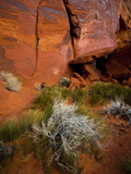 Reddish Rock Face  Utah  USA