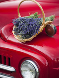 Lavender Bunches Rest on an Old Farm Pickup Truck  Washington  USA