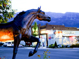 Statue of Bronze Stallion on Main Street in Small Town of Joseph  Wallowa County  Oregon  USA