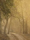 Early Morning Fog  Bandhavgarh National Park  India