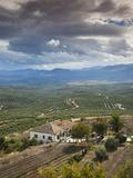 Olive Groves  Ubeda  Spain
