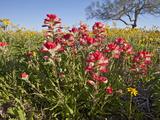 Wildflowers  Texas  USA
