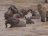 Elephants Bathing in the River  Samburu National Reserve  Kenya