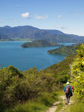 Queen Charlotte Track  Marlborough Sounds  South Island  New Zealand