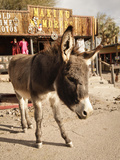 Route 66  Oatman  Arizona  USA