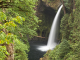 Eagle Creek  Mark O Hatfield Wilderness Area  Oregon  USA