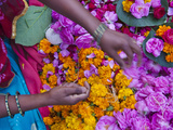 Woman Selling Flower  Pushkar  Rajasthan  India