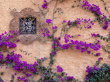 Ornamental Window  San Miguel De Allende  Mexico
