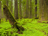 Forest Floor  Humboldt Redwood National Park  California  USA