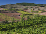Vineyards  Bobadilla  Spain