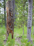 Indian Carving in Tree  Sawtooth National Recreation Area  Idaho  USA