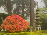 Japanese Maple and Stone Pagoda Lantern at the Portland Japanese Garden  Oregon  USA