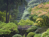 The Strolling Pond with Moon Bridge in the Japanese Garden  Portland  Oregon  USA