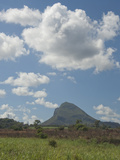 Sugar Cane Fields  Mauritius