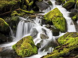 Lush Waterfall  Olympic National Park  Washington  USA