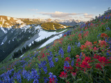 Indian Paintbrush and Lupine  Olympic National Park  Washington  USA